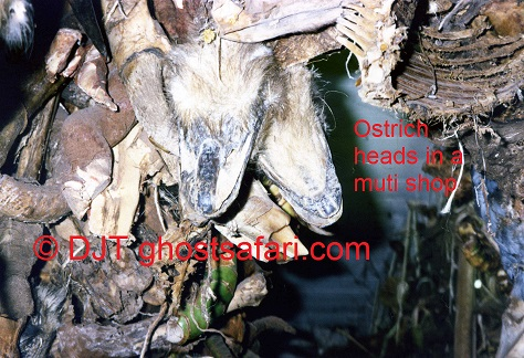Ostrich Heads in a Muti Shop © (c) DJT